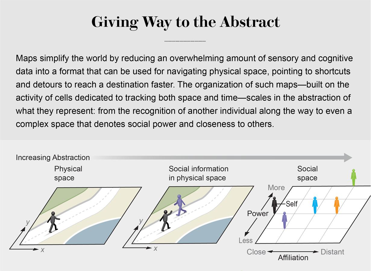 2d map of movement vs social hierarchy