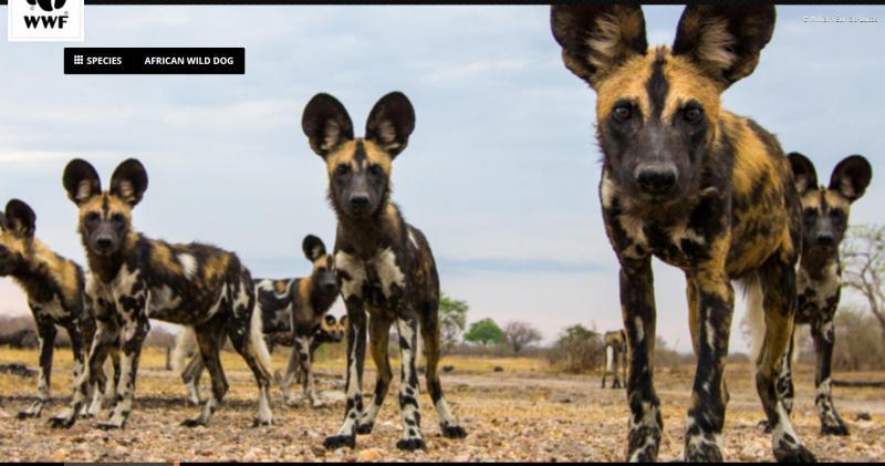 200128_183625_microsoft-edgedogs-or-hyenas-95-2